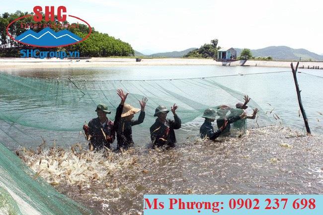 Vôi quan trọng như thế nào đối với nuôi trông thủy sản?